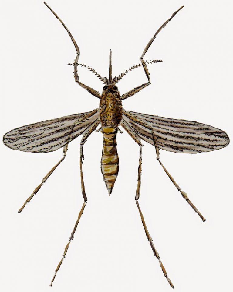 Comment bien vivre avec les moustiques au Québec!